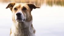 Blue-Green Algae: A Deadly Danger for Dogs