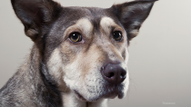 Bruising in Dogs: Ecchymosis