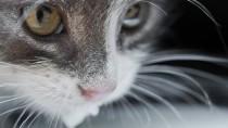 Can My Cat Drink Milk?