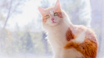 Caring for a Senior Cat: 7 Healthy Habits
