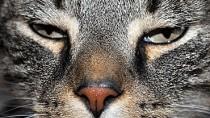 Panleukopenia in Cats