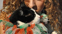 Idiopathic Vestibular Disease in Cats