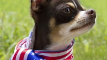 Celebrating The 4th of July With Your Pets: Firework Safety