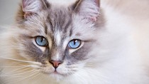 Chronic Kidney Disease: What Does Kidney Failure in Cats Really Mean?