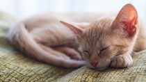 City and Country Cats: Preparing Your Cat for a New Environment