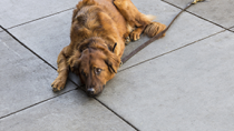 The Dangers of Incorrectly Used Leashes and Collars