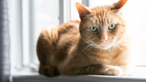 Diabetes Insipidus in Cats and Dogs