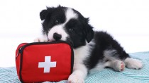 dog chewing on first aid kit