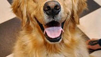 Cryptococcosis in Dogs