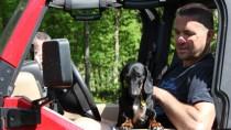 Dachshund in a Jeep