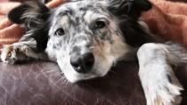 sick dog needs bed rest after vomiting
