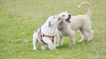 The Do's and Don'ts of Dog Parks