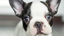 Dr. Ernie's Top Reasons to Visit the Vet With Your New Puppy