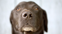 When to Consider Euthanasia for Your Dog or Cat