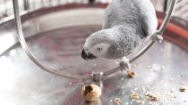 Exotics 101: Picking Your Perfect Pet