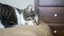 Feline Upper Respiratory Infection