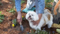 Fertilizer and Mulch Dangers for Dogs.
