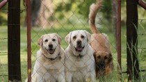 Finding the Right Dog Daycare