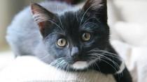 Black kitten on couch