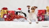 dog and cat enjoying holiday gifts