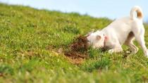 Help! My Dog Eats Poop, Why?