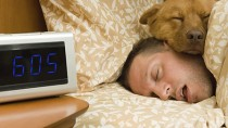 How Does Daylight Savings Time Affect Your Dog?
