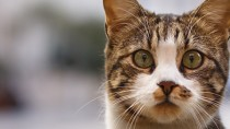 How Will My Veterinarian Check My Cat for Hyperthyroidism?