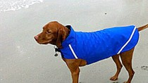 hypothermia and your pet