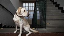 IMPA: Immune-Mediated Polyarthritis in Dogs (Non-erosive)