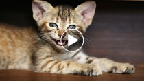 The Importance of an Oral Health Exam for Your Cat
