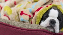 Is It Cold In Here, Or Did Your Pet Just Have Surgery?