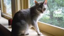 Shy cat on window sill