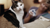 1 in 3 cats gets kidney disease, like the cat pictured here, sitting on the couch as the owner looks on