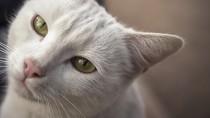 Kidney Stones in Cats