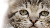 Lead Poisoning in Dogs and Cats