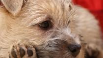Is My Dog Vomiting or Regurgitating?
