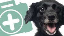 Pet First Aid: Build Your Own Pet First Aid Kit