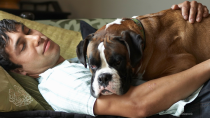 Pet Insurance is Easy to Get and Important to Have
