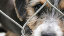 Pet Stores, Puppy Mills and Responsible Dog Adoption