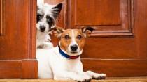 2 Dogs at Door