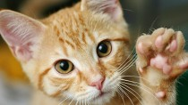 6 Surprising Facts About Kidney Disease in Cats