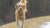 Protect Your Dog in Autumn Weather