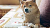 Canine Hypoparathyroidism