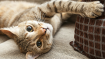 Cat Insurance is a Great Idea: Here's Why