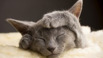 Is Your Cat Secretly Stressed?