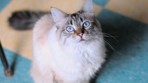 What's the Diagnostic Value of a Litter Box?