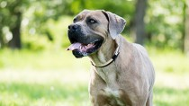 Diskospondylitis in Dogs: Infection in the Back