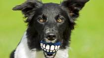 Dr. Ernie's Top 10 Dog Dental Questions