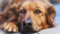 The Five Most Common Questions about Cancer in Dogs