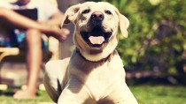 Heat Stroke in Dogs: Test Your Knowledge with This Quiz!